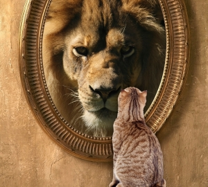 cat-looking-in-mirror-sees-lion1-e1452937071370